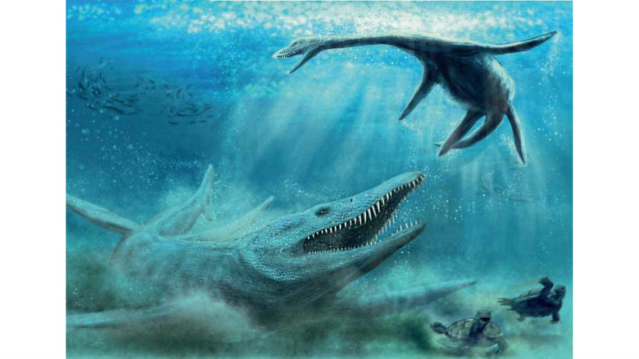 Mazowsze rajem paleontologów? Odnalezione szczątki pliozaura wskazują na taką możliwość