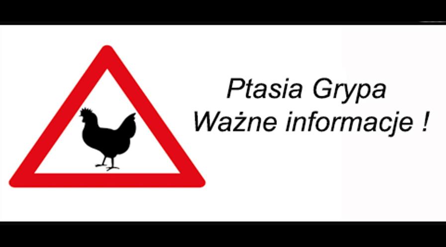 Wirus grypy ptaków A(H5N8) nie jest chorobotwórczy dla ludzi.